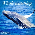 【 from Yomitan village 】 Whale Watching