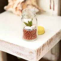 mini Gardening in the bottle